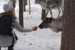 Lapland21