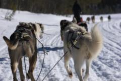 Lapland3